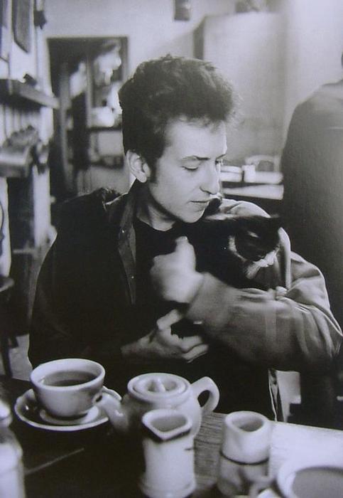 Bob Dylan Cat