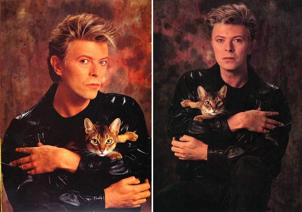 David-Bowie-with-a-cat