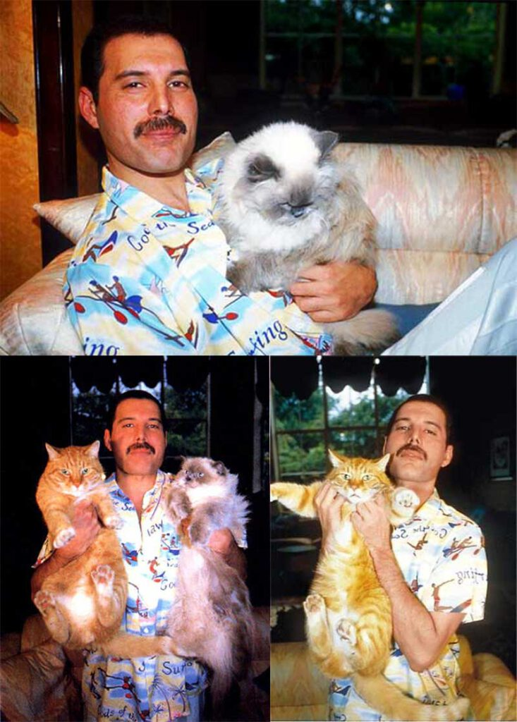 Freddie Mercury Cat