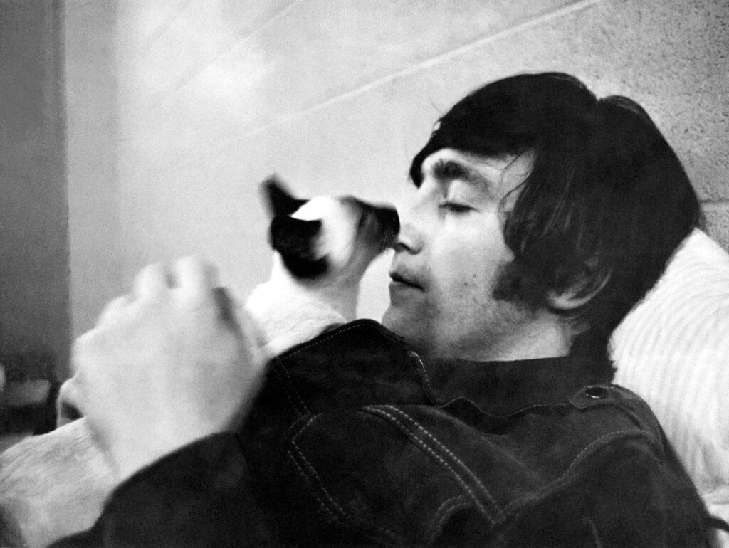 John Lennon Cat
