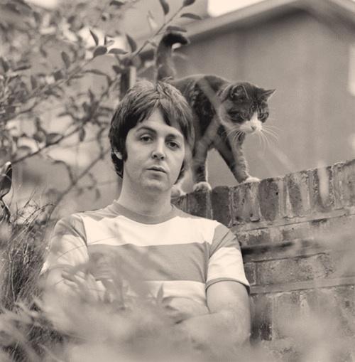 Paul McCartney Cat