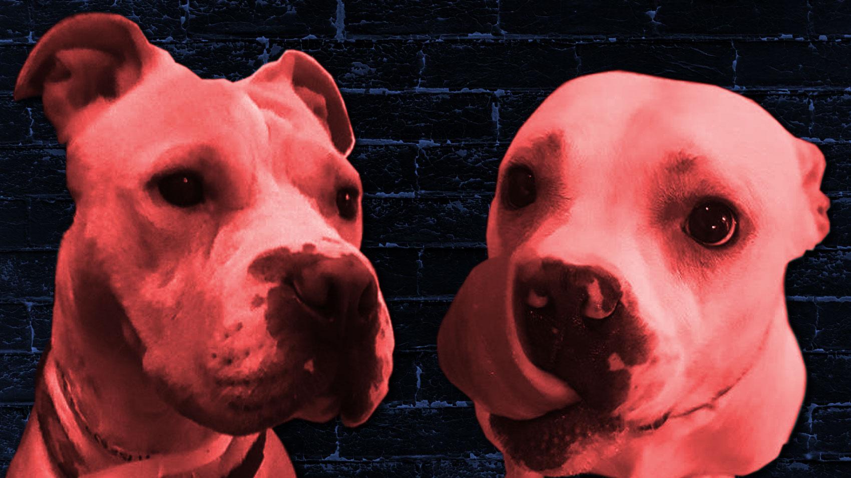 riotfest_puppyoftheweek_11-10