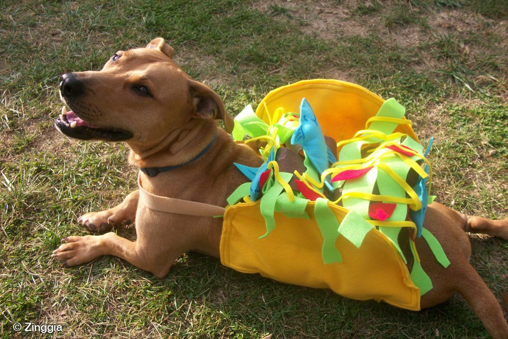 Dogs and cats wearing taco costumes riot fest for Is tuna fish good for dogs