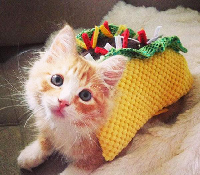Taco Cat spelled backwards is Taco Cat. Taco Dog spelled backwards is God o Cat. Here are some photos of dogs and cats wearing taco costumes.