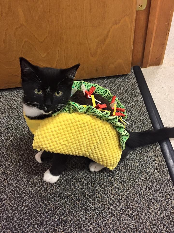 Cats Wearing Food