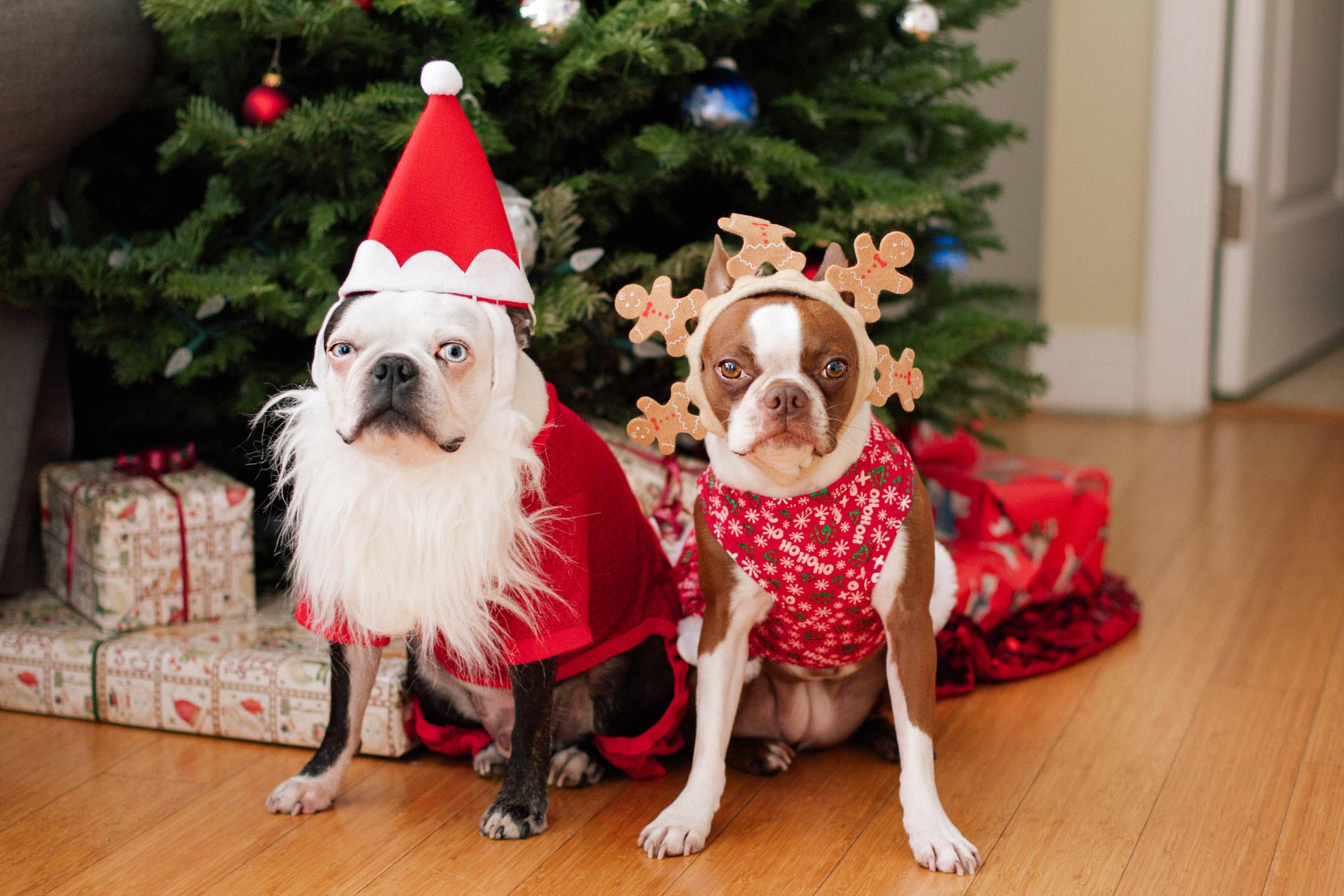 Here Are Some Photos Of Pets Wearing Christmas Outfits | Riot Fest
