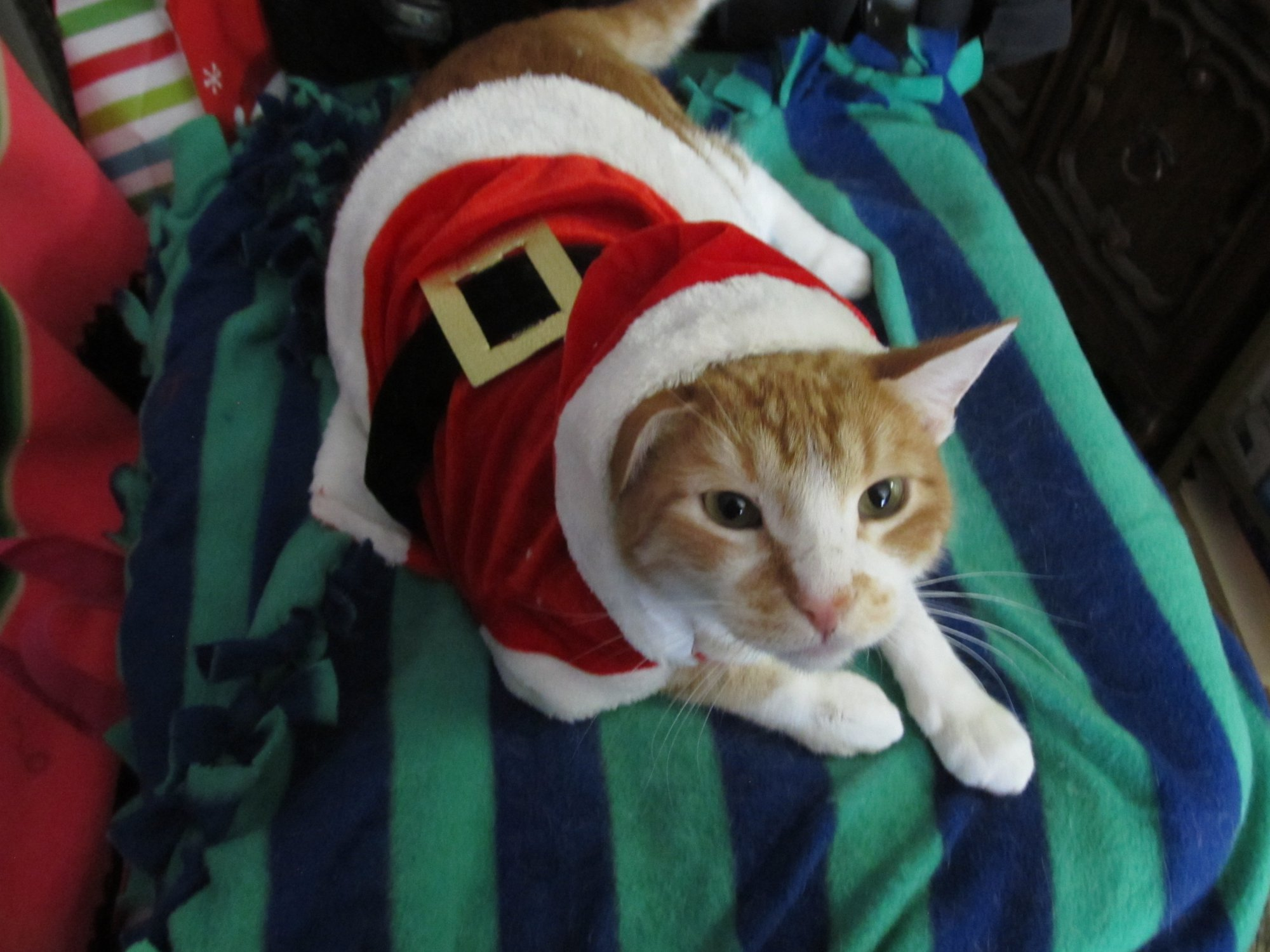 Here are some dogs and cats and rabbits and guinea pigs wearing holiday costumes. Youu0027re welcome. & Here Are Some Photos Of Pets Wearing Christmas Costumes | Riot Fest