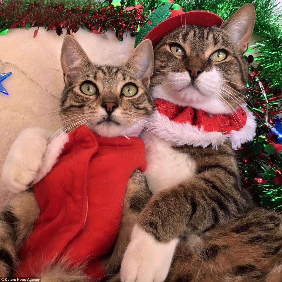 & Here Are Some Photos Of Pets Wearing Christmas Costumes | Riot Fest