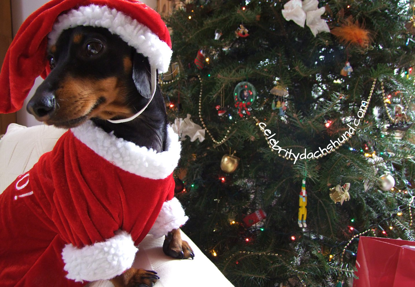 Christmas Costumes For Pets & Sc 1 St Dress The Dog