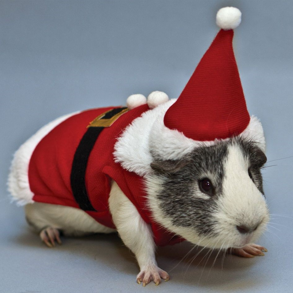 Dogs Cats Rabbits And A Pig Dressed As Santa Claus
