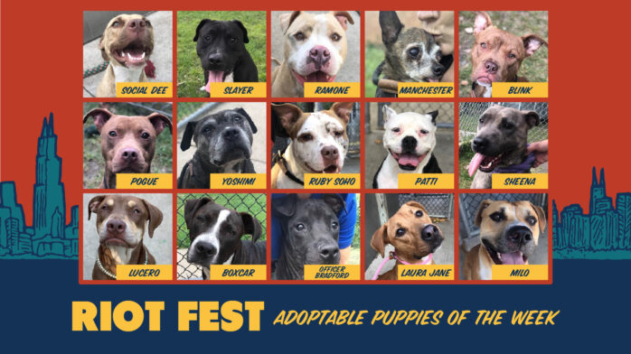 Riot Fest Adoptable Puppies of the Week: Riot Fest Edition